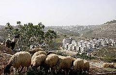 Палестинское руководство передало РФ участок земли в Вифлееме