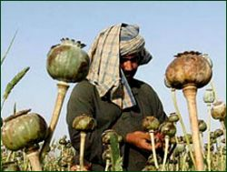 Афганистан сокращает производство наркотиков