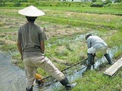 Наступил конец мирового рисового беспредела