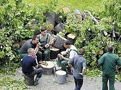 В России идет методичное уничтожение парков и скверов