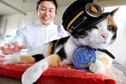 Кот спасает японскую транспортную компанию от банкротства