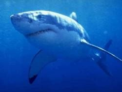На мексиканский курорт нападают акулы, есть жертвы