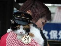 Кошка стала начальником вокзала