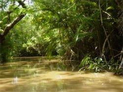 В джунглях Амазонки обнаружено ранее не известное племя