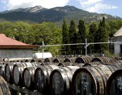 Изменения в климате коснутся виноделия