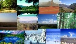 Ученые хотят изменить климат с помощью искусственных деревьев