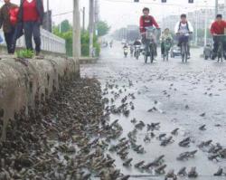 Животные предсказывают землетрясение?