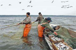 Президент вернул рыболовство в прямое подчинение премьер-министру