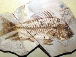 В Австралии найдено древнейшее живородящее существо