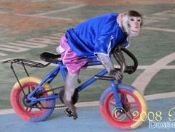 Дрессировщик приобщил обезьянку к спорту