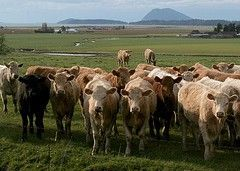 Жителей Германии предупредили о перебоях с молочной продукцией