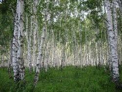 Росприроднадзор лишился функций контроля за лесами