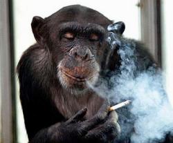 Изощренный маркетинг табака атакует молодежь