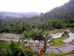 В Индонезии зафиксировано сразу четыре землетрясения