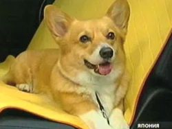 Honda представила автомобиль, удобный для собак