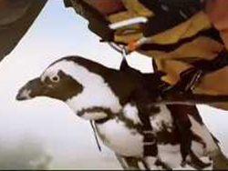 Куриц и пингвинов научили летать для съемок рекламы