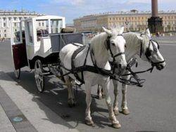 Петербургские извозчики продолжат ездить без прав и номеров