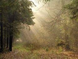 Дума разрешила россиянам бесплатное пребывание в лесах