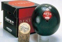 В Японии c аукциона продан арбуз за 6100 долларов
