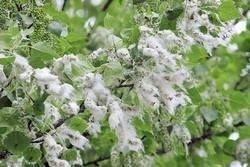 Как защитить себя от сезонной аллергии
