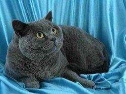 В Уфе проходит международный конкурс кошачьей красоты