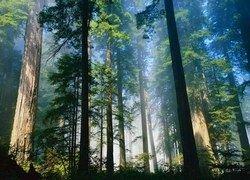 Купить лес по заниженным ценам станет сложнее