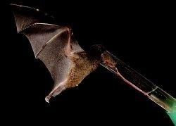 Найдено животное с языком в полтора раза длиннее тела