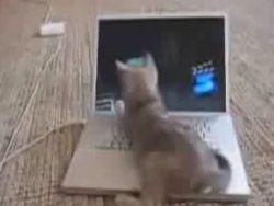 Котенок играет с ноутбуком