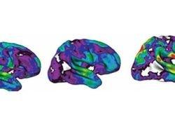 Окончательный IQ определяют гены