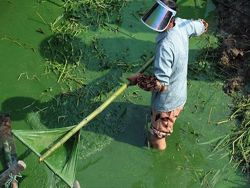 Сильное загрязнение озера в провинции Аньхой