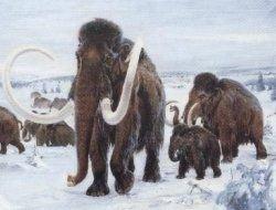 Перед вымиранием мамонты разделились на две ветви