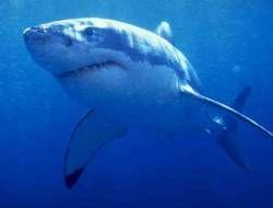Акулам в Средиземном море грозит исчезновение