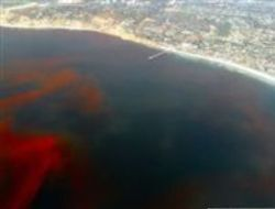 Откуда приходит «красный прилив»