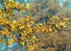 Листья могут сами поддерживать нужную температуру