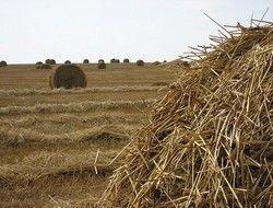 Сельское хозяйство объявили способом увеличения численности россиян