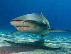 Новозеландский аттракцион с акулами ждет экстремалов