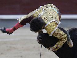 Бык забодал лучшего испанского матадора