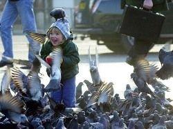 Голуби оказались умнее трёхлетних детей