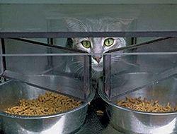 Как правильно кормить кошек и собак