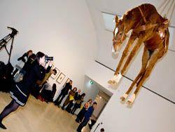 Интересный экспонат на выставке Маурицио Каттелана в Сиднее
