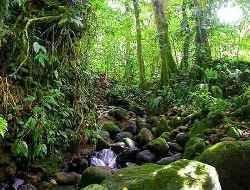Запущен многомиллионный проект по спасению тропического леса в Африке