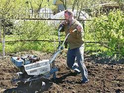 Каждый третий россиянин кормится с садового участка