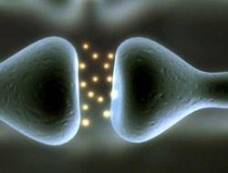 Мозг поумнел от хорошего электрического контакта