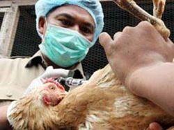 Жертвами птичьего гриппа в Индонезии стали еще 2 человека