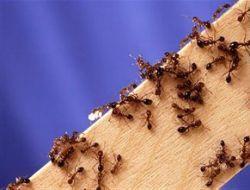 В Китае мошенник, продававший «лечебных муравьев», приговорен к смерти