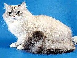 Появилась идея - создать сайт Дорофея, главного кота России