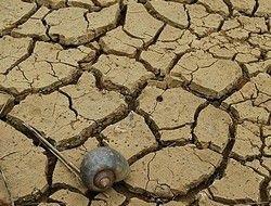 На Китай обрушилась новая беда - засуха