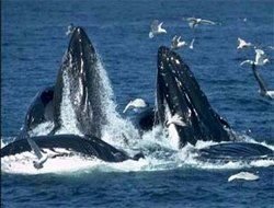 В Токио гринписовцы, боровшиеся с убийством китов, украли китовое мясо