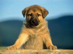 Итальянка оставила в наследство бездомным собакам 1,5 млн евро