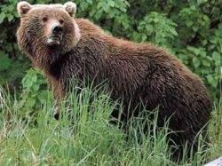 Медведь убил участницу соревнований по ориентированию